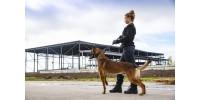 L'utilisation de chiens dans le gardiennage