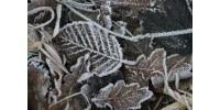 Les conséquences de la saison hivernale sur les droits et obligations du locataire